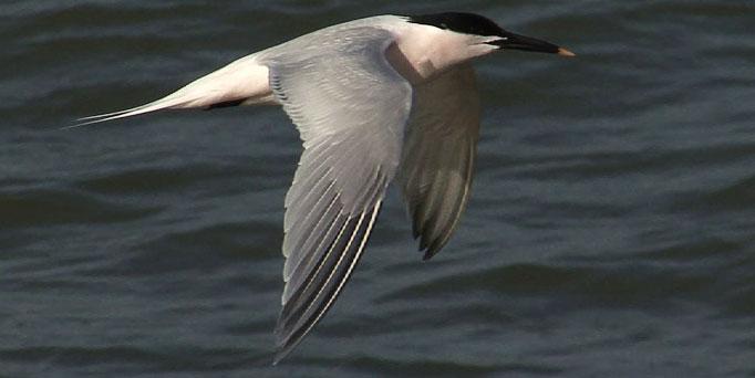 ManyBirds Bird Videos Home